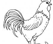 Coloriage et dessins gratuit Coq 3 à imprimer