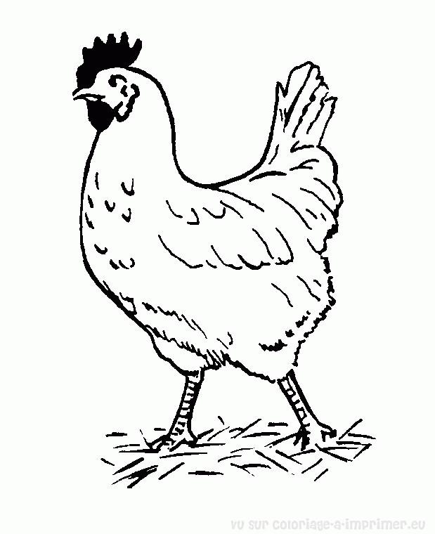 Coloriage et dessins gratuits Coq dans la ferme à imprimer