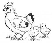Coloriage et dessins gratuit Poulet et ses petits à imprimer