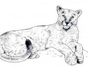 Coloriage Cougars en couleur
