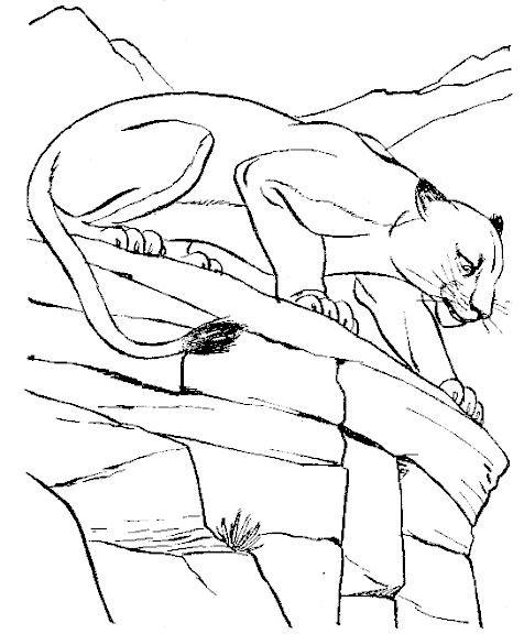 Coloriage et dessins gratuits Cougars regarde attentivement à imprimer