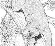 Coloriage Cougars sur l'arbre