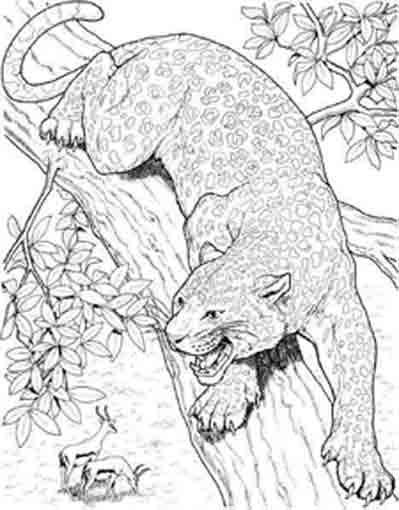Coloriage et dessins gratuits Cougars sur l'arbre à imprimer
