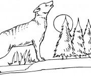 Coloriage dessin  Coyote 14