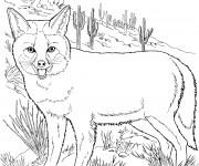 Coloriage dessin  Coyote 16
