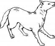 Coloriage dessin  Coyote 9