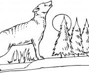 Coloriage et dessins gratuit Coyote dans la forêt à imprimer