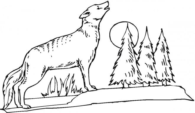 Coloriage et dessins gratuits Coyote dans la forêt à imprimer