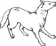Coloriage et dessins gratuit Coyote en couleur à imprimer