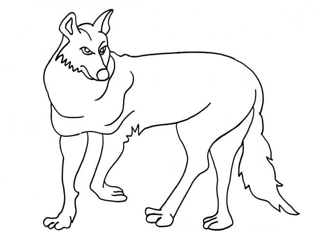 coloriage coyote facile dessin gratuit imprimer. Black Bedroom Furniture Sets. Home Design Ideas