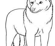 Coloriage Coyote maternelle
