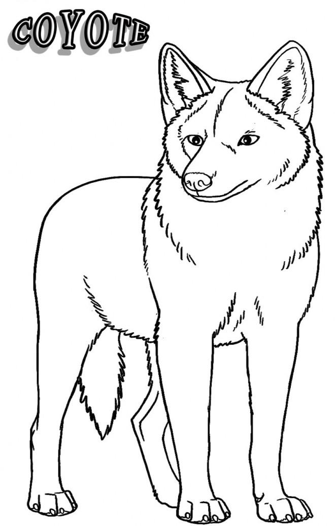 Coloriage et dessins gratuits Coyote maternelle à imprimer