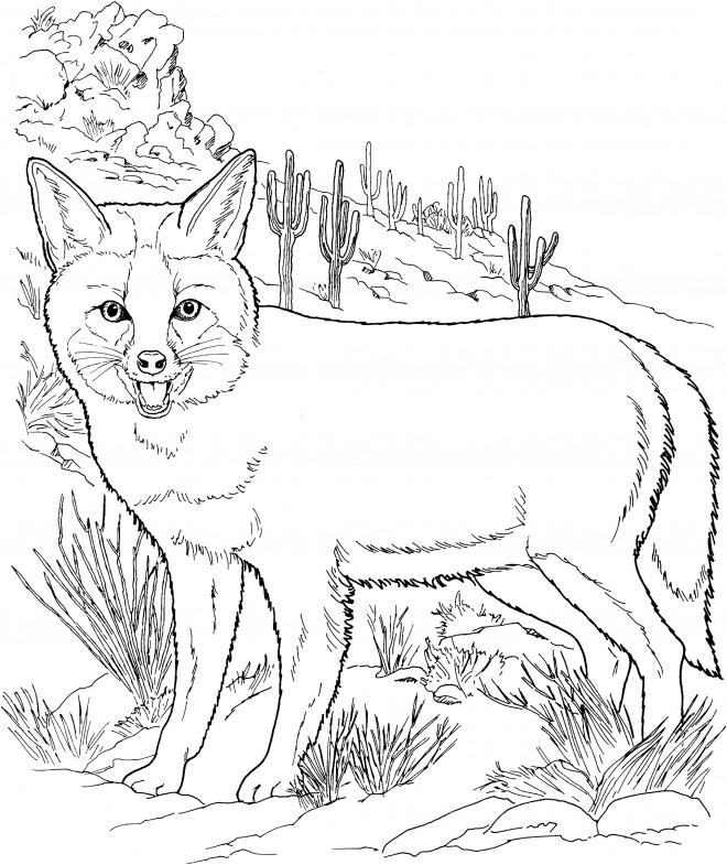 Coloriage coyote portrait dessin gratuit imprimer - Dessin de coyote ...