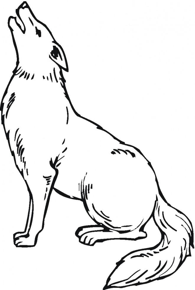 Coloriage et dessins gratuits Coyote qui hurle à imprimer