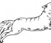 coloriage coyote tout en sautant dessin gratuit imprimer. Black Bedroom Furniture Sets. Home Design Ideas