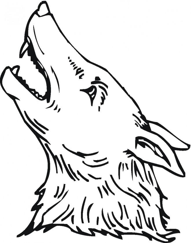 Coloriage et dessins gratuits Tête de Coyote à imprimer