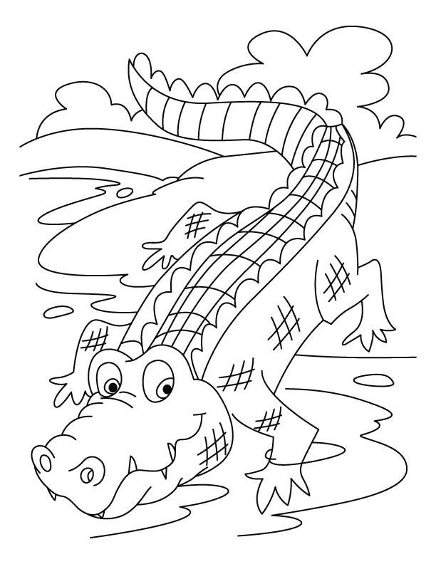 Coloriage et dessins gratuits Crocodile 17 à imprimer