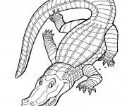 Coloriage dessin  Crocodile 3