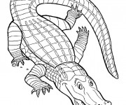Coloriage Crocodile couleur