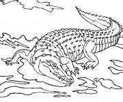Coloriage et dessins gratuit Crocodile dans le lac à imprimer