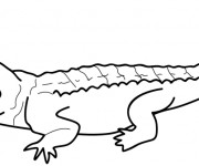 Coloriage Crocodile en couleur