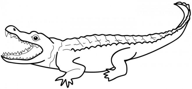 Coloriage De Crocodile A Colorier.Coloriage Crocodile En Couleur Dessin Gratuit A Imprimer