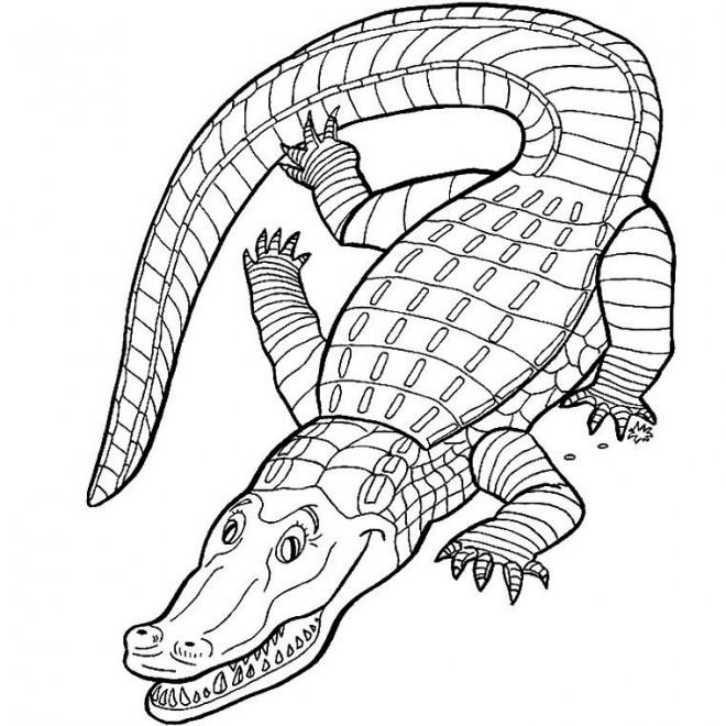 Coloriage Crocodile En Ligne Dessin Gratuit à Imprimer