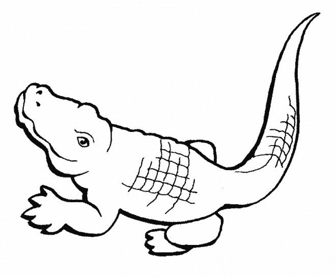 Coloriage Animaux Crocodile.Coloriage Crocodile Facile Dessin Gratuit A Imprimer