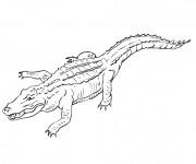 Coloriage Crocodile maternelle