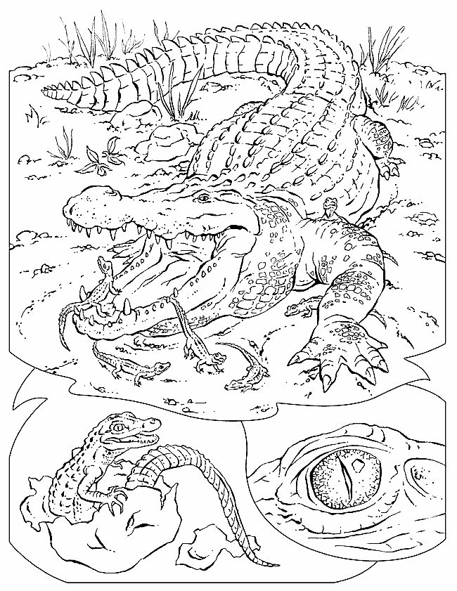 wildlife habitat coloring pages - photo#9