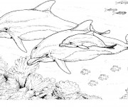 Coloriage dessin  Dauphin 12