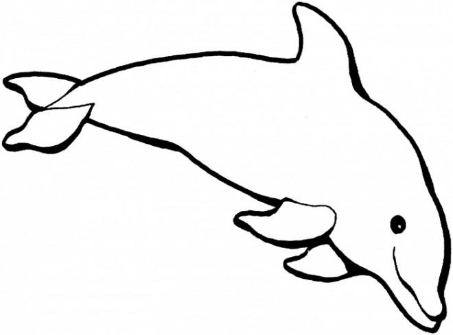 Coloriage dauphin en couleur dessin gratuit imprimer - Dauphin dessin couleur ...