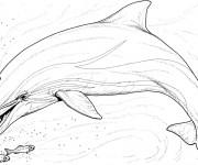 Coloriage Dauphin et poissons