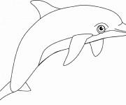Coloriage et dessins gratuit Dauphin noir et blanc à imprimer
