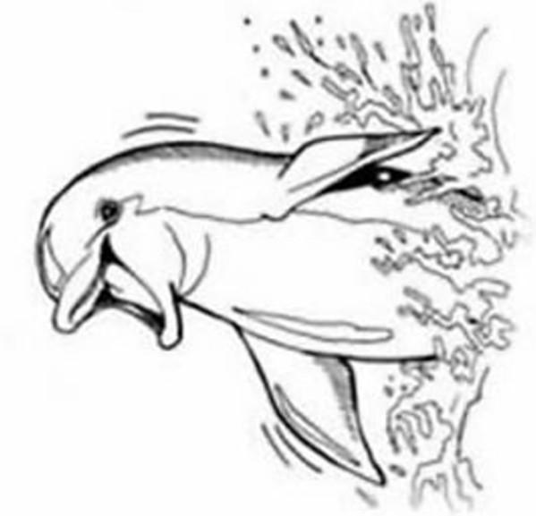 Coloriage dauphin vecteur dessin gratuit imprimer - Images dauphins a imprimer ...
