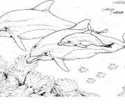 Coloriage et dessins gratuit Dauphins au crayon à imprimer