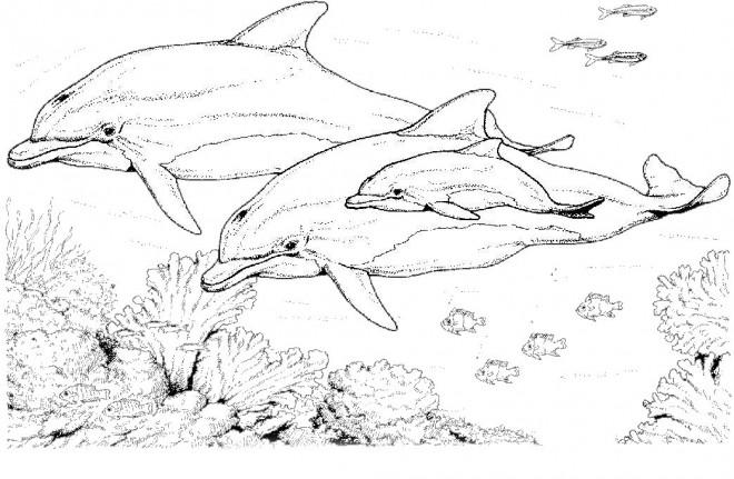 Coloriage dauphins au crayon dessin gratuit imprimer - Petshop gratuit ...