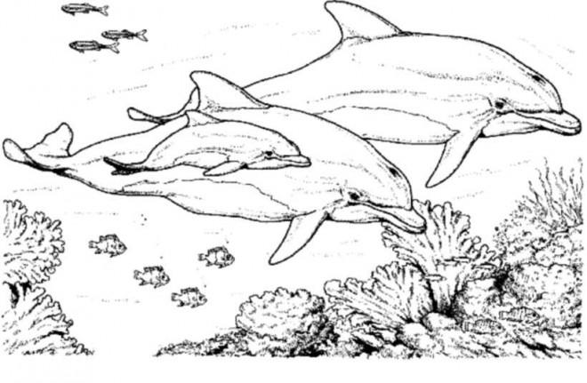 Coloriage et dessins gratuits famille de dauphins dans la mer à imprimer