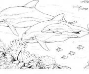 Coloriage et dessins gratuit Les Dauphins en famille à imprimer