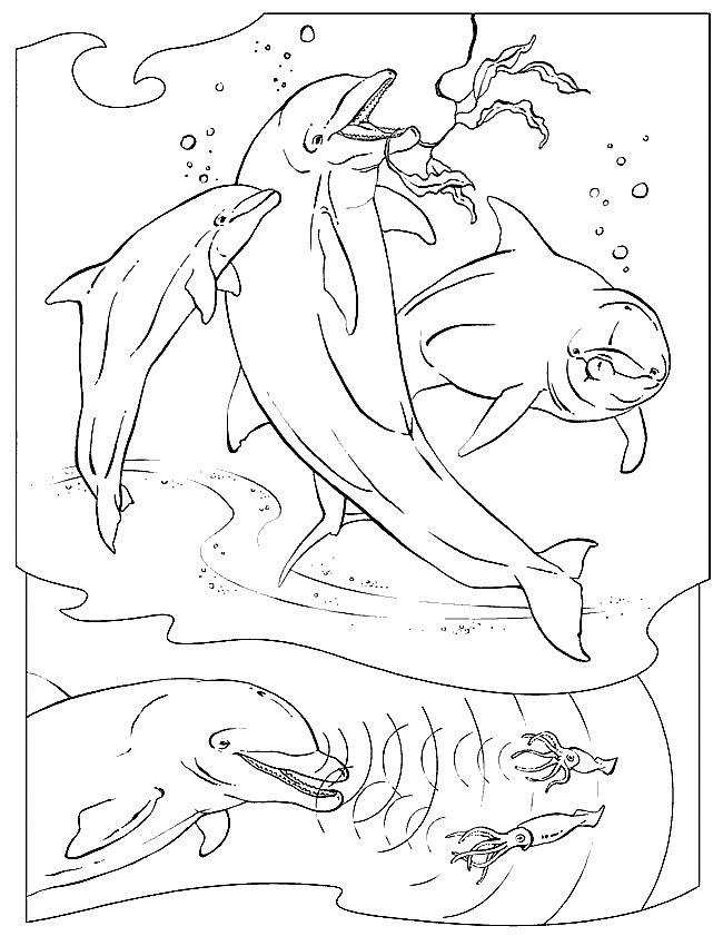 Coloriage et dessins gratuits Trois jolis Dauphins qui sautent à imprimer