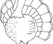 Coloriage et dessins gratuit Dinde à télécharger à imprimer
