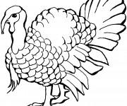 Coloriage et dessins gratuit Dinde couleur à imprimer