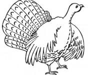 Coloriage Dinde levant ses ailes