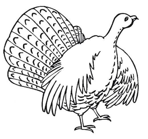 Coloriage et dessins gratuits Dinde levant ses ailes à imprimer