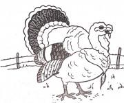 Coloriage et dessins gratuit Dindon de ferme à imprimer