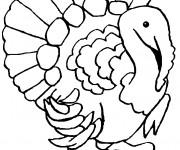 Coloriage et dessins gratuit Dindon domestique à imprimer