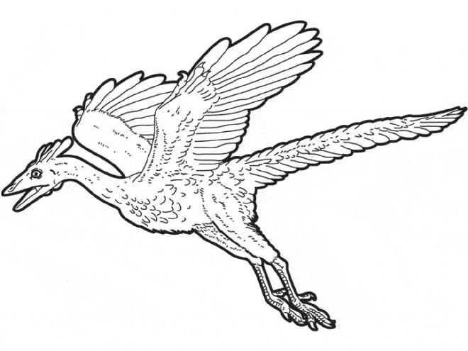 Coloriage et dessins gratuits Dinosaure volant à imprimer