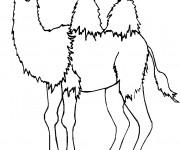 Coloriage et dessins gratuit Chameau avec deux Bosses à imprimer