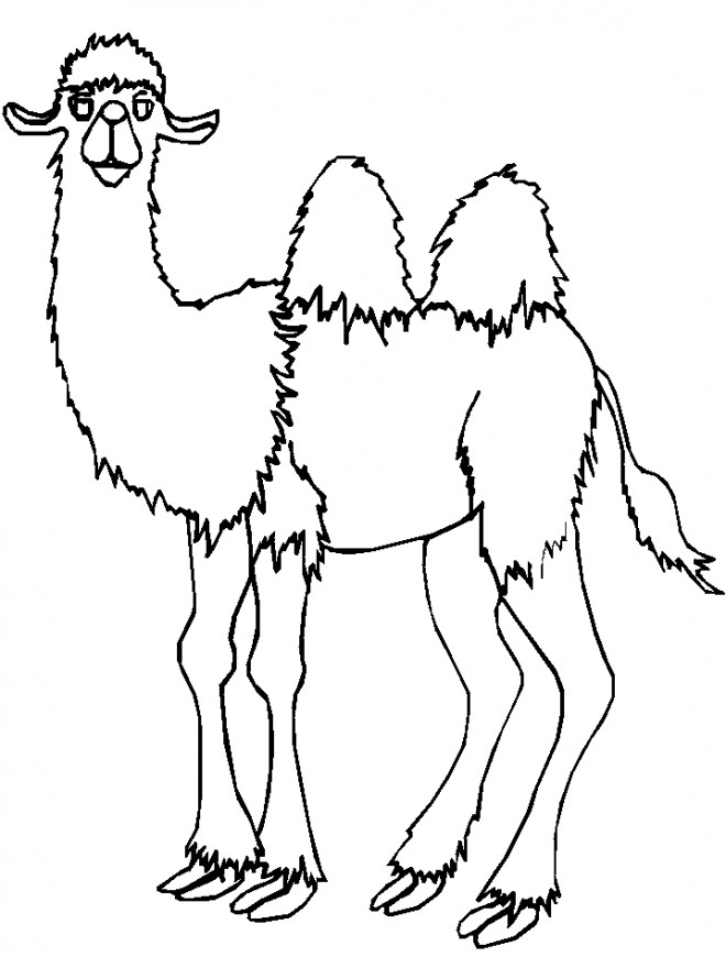 Coloriage et dessins gratuits Chameau avec deux Bosses à imprimer