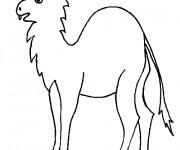 Coloriage et dessins gratuit Chameau bizarre à imprimer